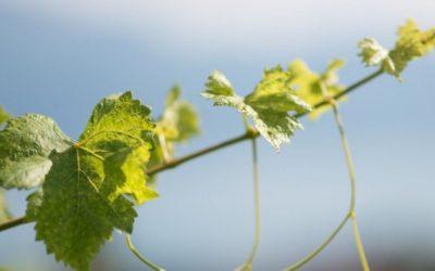 Un diplôme pour être vigneron ?